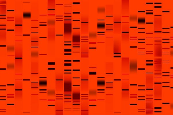 genetic markers in red dye