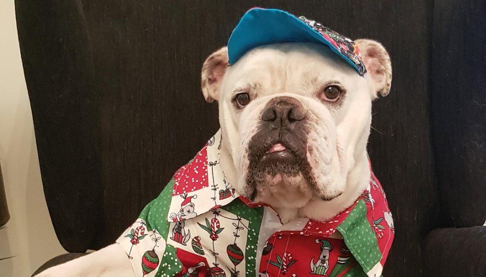 Palliative Care Dog, George Wilson